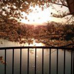 桜の季節よさようなら