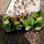 2019年春の家庭菜園を始めました